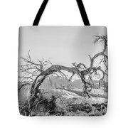 Dead Old Tree Near Monument Valley Arizona Tote Bag