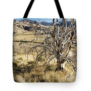 Dead Tree Panorama Tote Bag