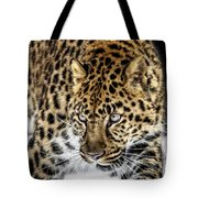 Deadly Serious Tote Bag