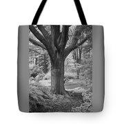 Deciduous Tree Ir Tote Bag