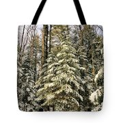 Deep In The Maine Woods Tote Bag
