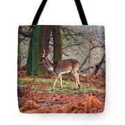 Deer Among The Ferns Tote Bag