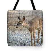 Deer Fawn - 2 Tote Bag