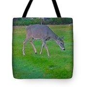Deer Grazing In City Field Tote Bag