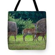 Deer In A Hay Field Tote Bag