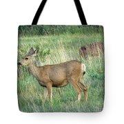 Deer In Boulder Colorado Tote Bag
