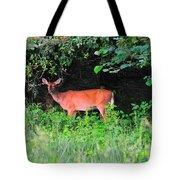 Deer In Overhang Of Trees Tote Bag