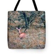 Deer In Woods Tote Bag