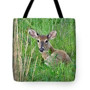 Deer Laying In Grass Tote Bag
