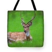 Deer Ruminating Tote Bag