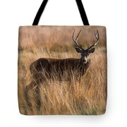 Deers Attention Tote Bag