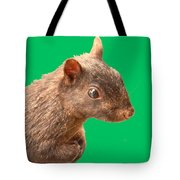 Definately Bright Eyed Tote Bag
