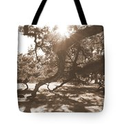 Defying Gravity In Sepia Tote Bag