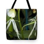 Dendrobium Orchid Tote Bag