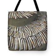 Denmark, Romo, Seashells, Razor Clams Tote Bag