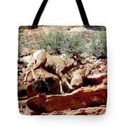 Desert Bighorn Ram Walking The Ledge Tote Bag