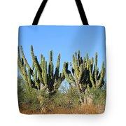 Desert Cacti In Cabo Pulmo Mexico Tote Bag