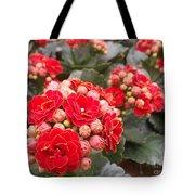 Desert Rose Tote Bag