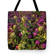 Desert Sand Verbena And Brown-eyed Primrose Below The Coyote Mountains California Tote Bag
