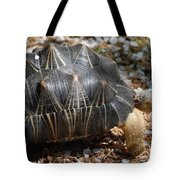 Desert Turtle With An Unusual Shell In The Wild Tote Bag