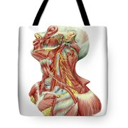 Detailed Dissection View Of Human Neck Tote Bag