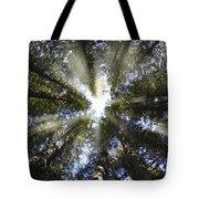 Devoto Grove Tote Bag