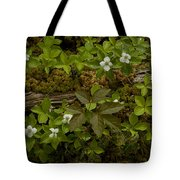 Dew Dropped Spring Bunchberries Tote Bag