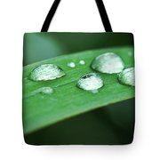 Dew Drops On A Blade Of Grass Tote Bag