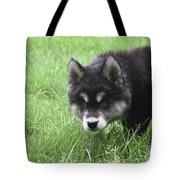 Dew Drops On The Nose Of An Alusky Puppy Dog Tote Bag