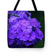 Dew Kissed Summer Phlox Tote Bag