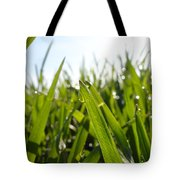 Dewdrops On New Wheat Tote Bag