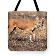 Dhole In The Wild Tote Bag