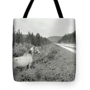 Dilemma On Highway #1, Chickaloon, Alaska Tote Bag