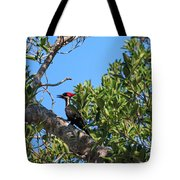 Ding Darling - Pileated Woodpecker Resting Tote Bag