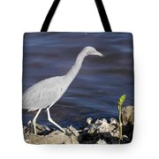 Ding Darling Wildlife Refuge Vii Tote Bag