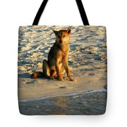 Dingo On The Beach Tote Bag