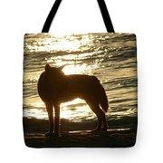 Dingo Sunset Tote Bag