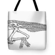 Dinosaur: Corythosaurus Tote Bag