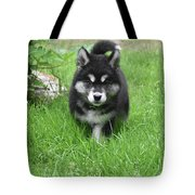 Dinstinctive Black And White Markings On An Alusky Pup Tote Bag