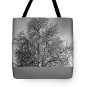 Discovery Park No.1 Tote Bag