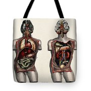 Dissected Torsos And Brains Tote Bag
