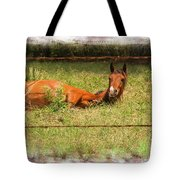 Disturbed Napping Tote Bag