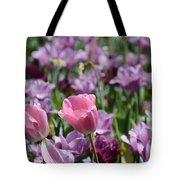 Divine Tulip Display Tote Bag