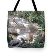 Do Not Wake The Sleeping Lion Tote Bag