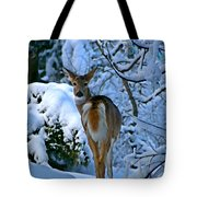 Doe In The Snow In Spokane 2 Tote Bag