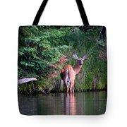 Doe In Water Tote Bag