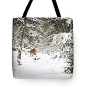 Doe In Winter Snow  Tote Bag