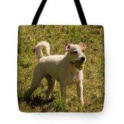 Dog And A Ball Tote Bag