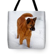 Dog Days Of Winter Tote Bag