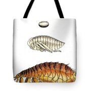 Dog Flea, Lifecycle, Illustration Tote Bag